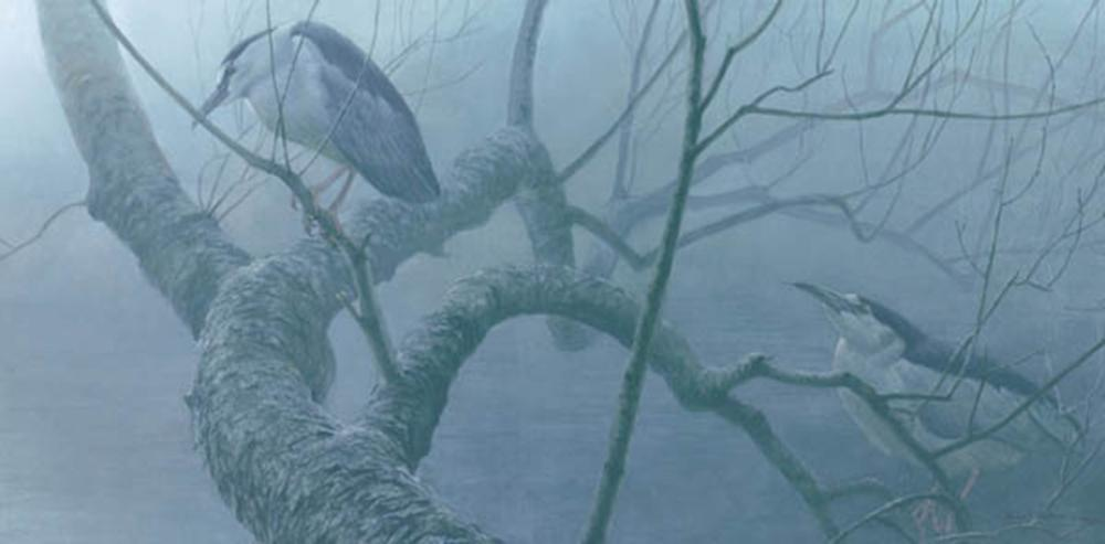 """Robert Bateman's """"Black-Crowned Night Heron Pair"""" Limited Edition Canvas Signed And Numbered"""