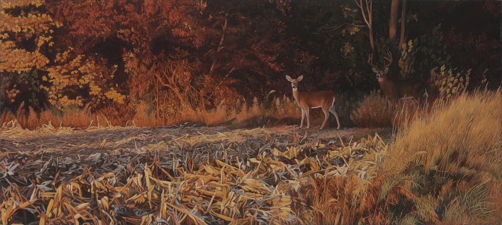 """Clinton Jammer's """"Ladies First - White-Tailed Deer"""" Original Painting"""