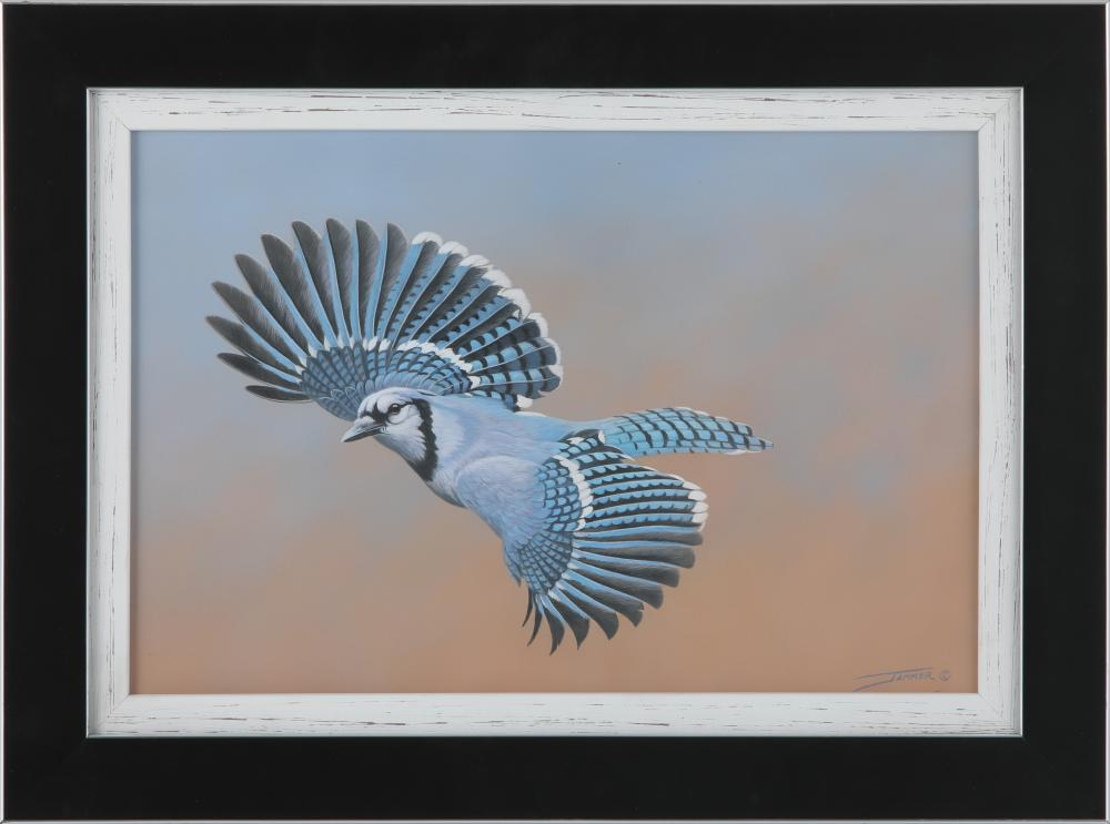 """Clinton Jammer's """"His Magnificence - Bluejay"""" Original Painting"""
