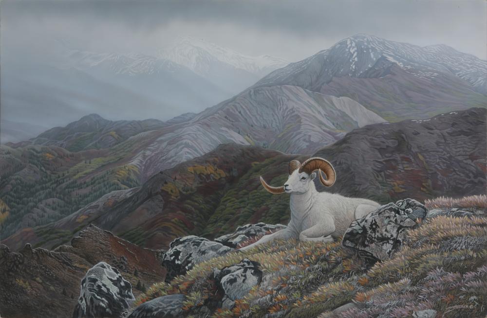 "Clinton Jammer's ""Denali's Pride - Dall Sheep"" Original Painting"