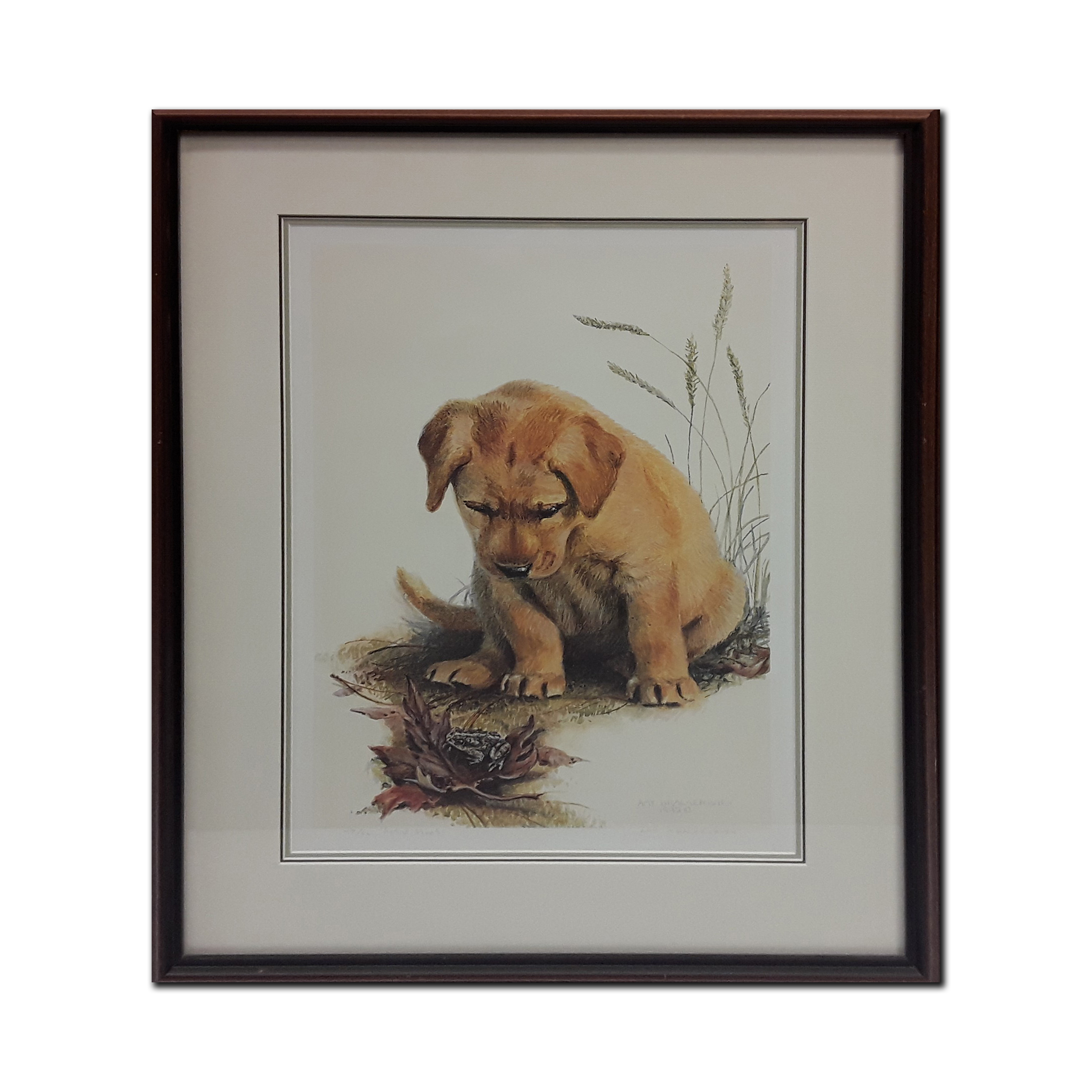 """Amy Brackenbury's """"Toadally Captivated"""" Limited Edition Artist Proof Framed Print"""