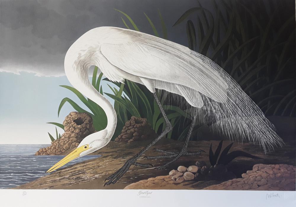 John James Audubon's 'Birds of America'- M. Bernard Loates Edition (set of prints)