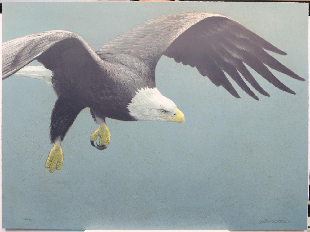 """Robert Bateman's """"Approach - Bald Eagle"""" Limited Edition Original Lithograph Signed and Numbered"""