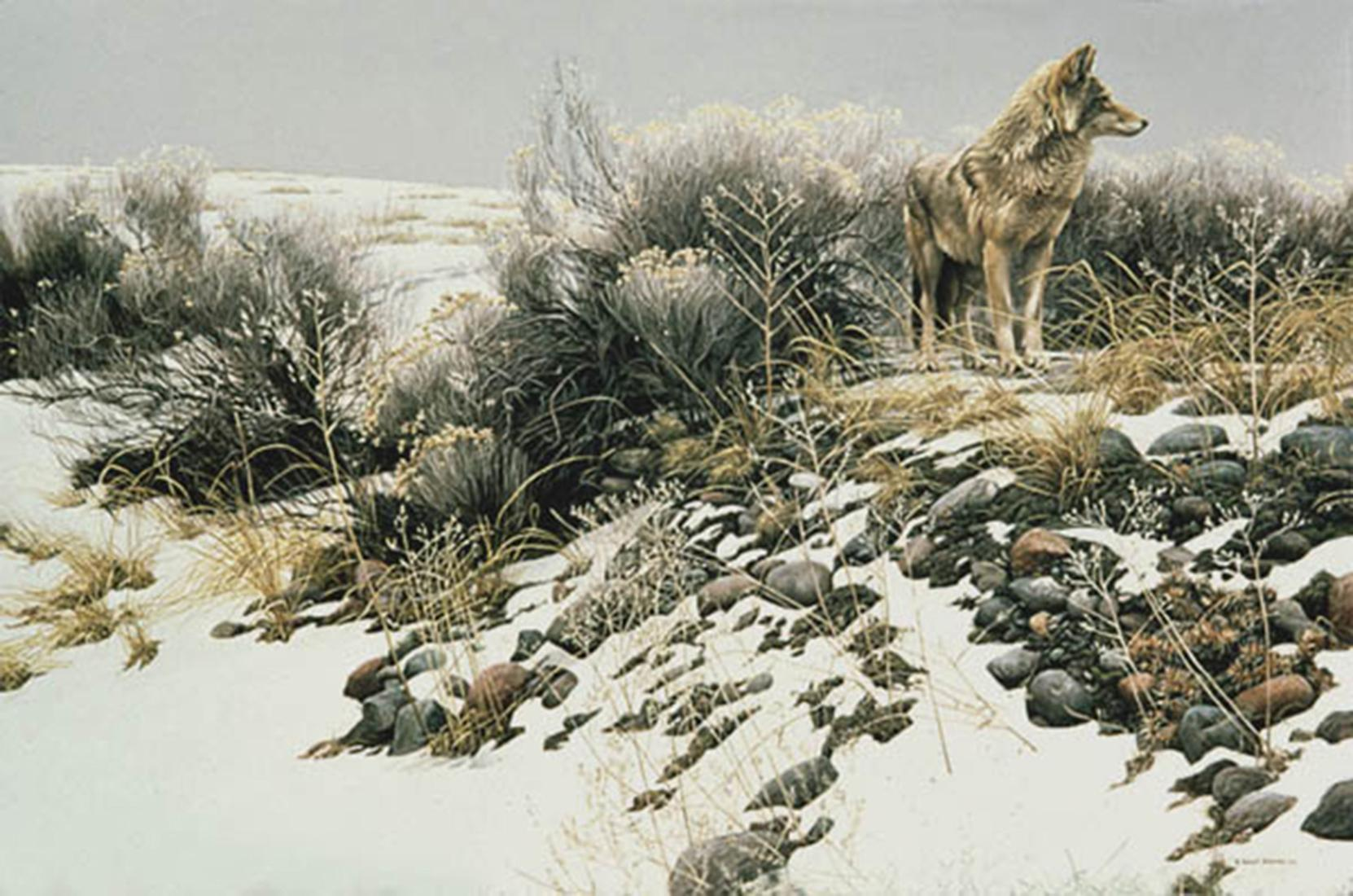 """Robert Bateman's """"Coyote in Winter Sage"""" Limited Edition Canvas Signed And Numbered"""