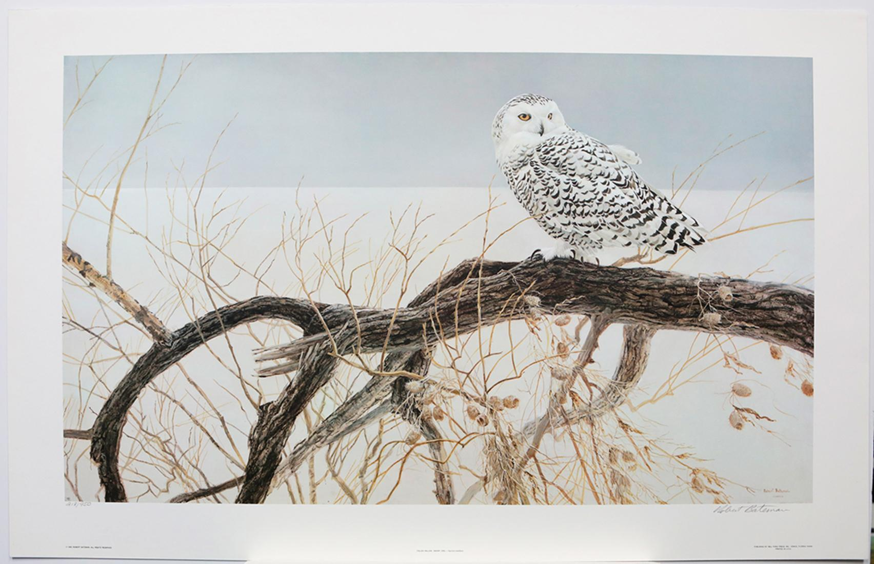 """Robert Bateman's """"Fallen Willow - Snowy Owl"""" Limited Edition Print Signed and Numbered"""