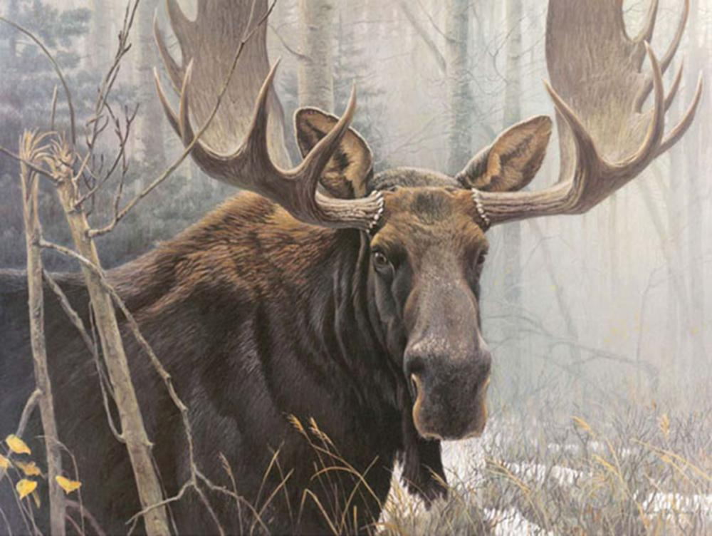 """Robert Bateman's """"Bull Moose - Renaissance Edition"""" Limited Edition Canvas Signed And Numbered"""
