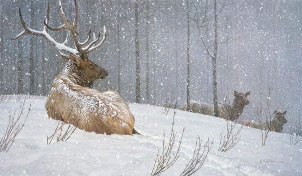 """Robert Bateman's """"Evening Snowfall - American Elk"""" Limited Edition Canvas Signed And Numbered"""
