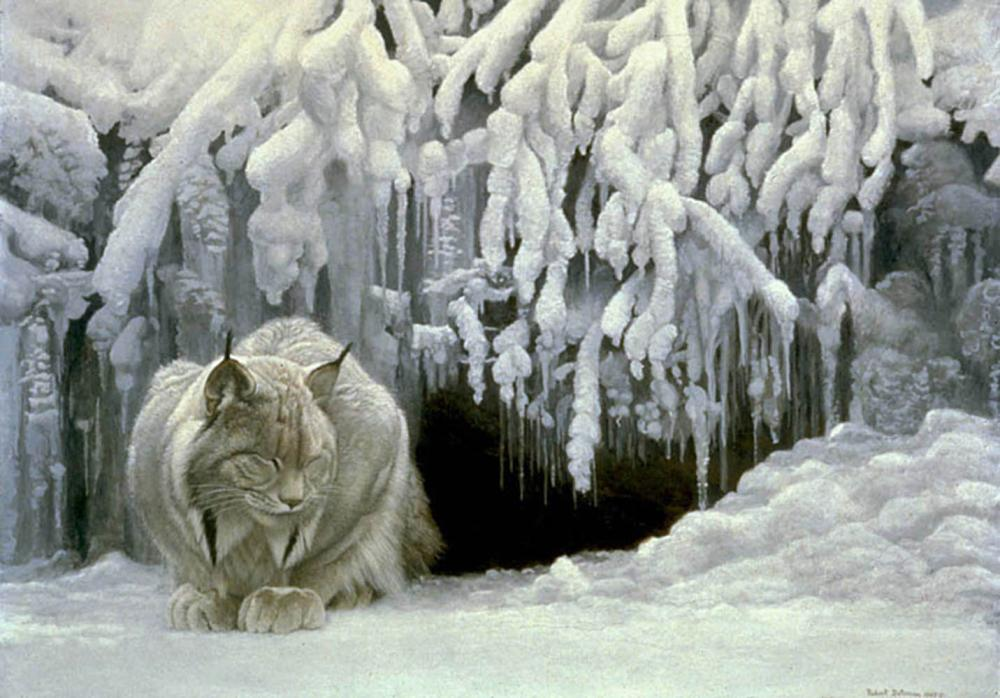 "Robert Bateman's ""Dozing Lynx"" Limited Edition Canvas Signed And Numbered"