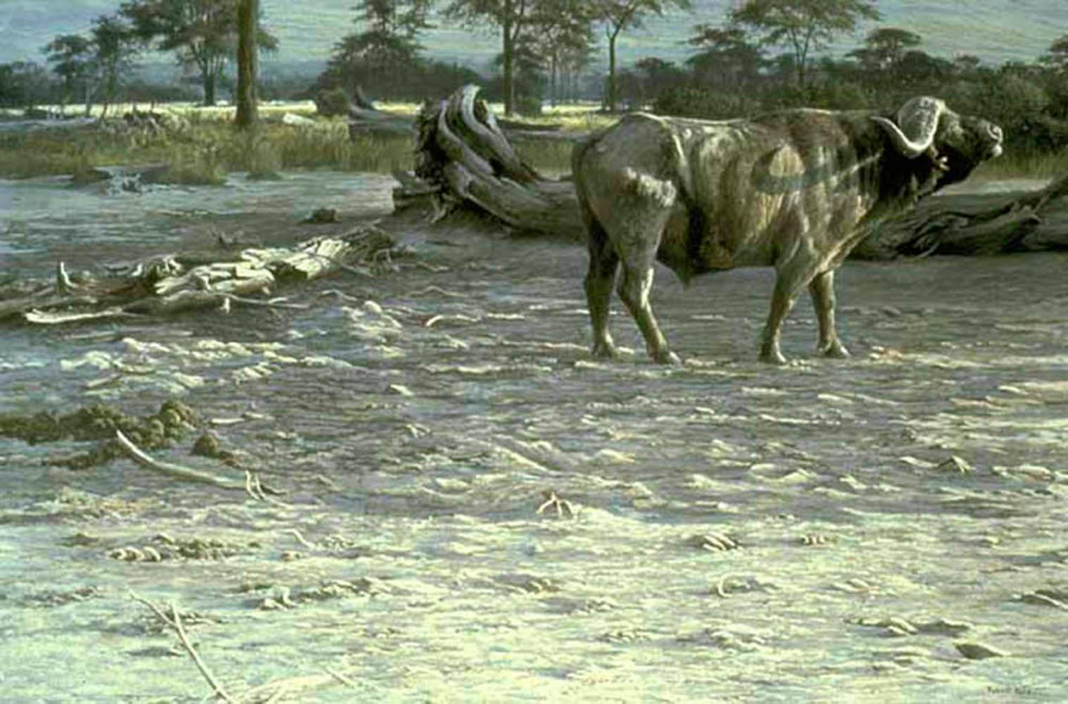 "Robert Bateman's ""Buffalo at Amboseli"" Limited Edition Print"