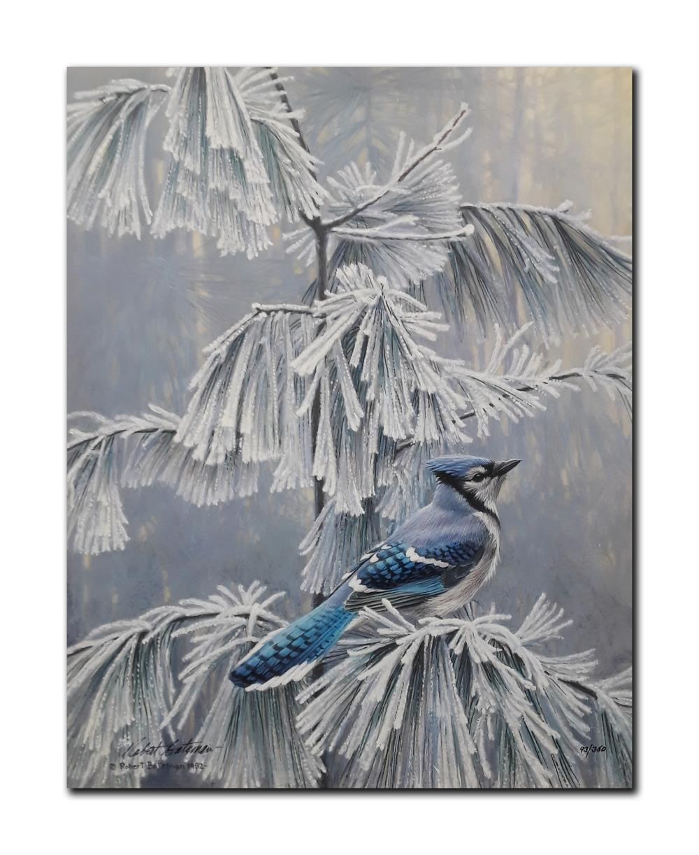 "Robert Bateman's ""Frosty Morning- Blue Jay"" Clasart Rigclee"