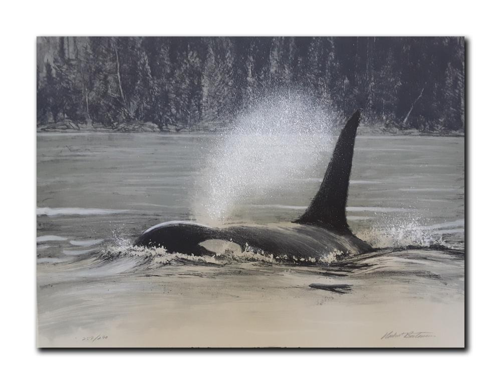 """Robert Bateman's """"Fluid Power- Orca"""" Lithograph"""
