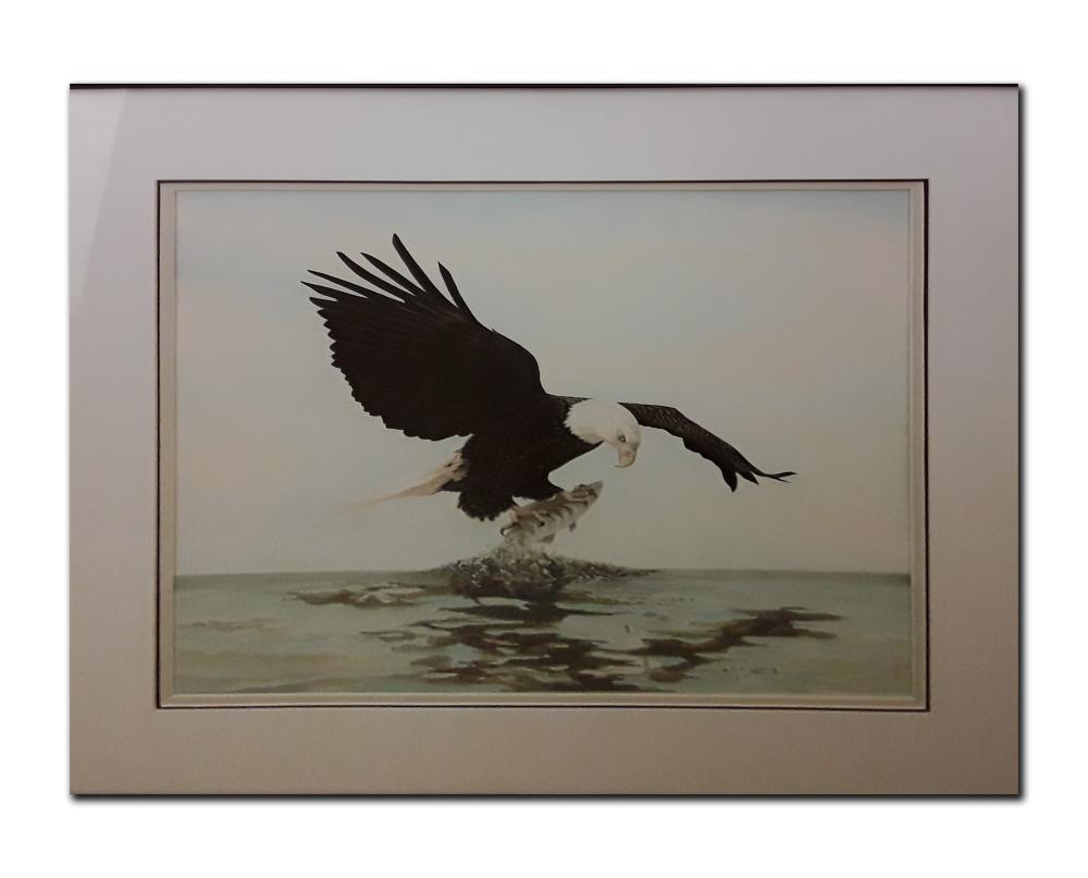 Vicky Waring's 'Eagle and Trout' Original Watercolour Framed Painting