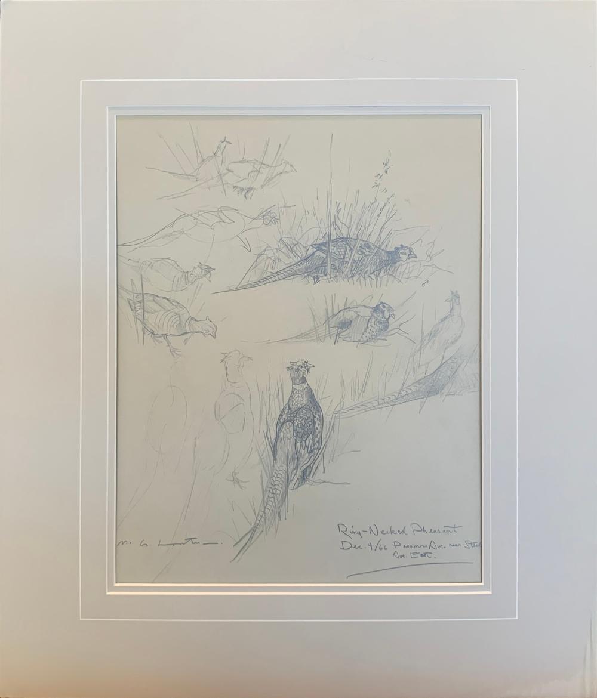 "Glen Loates ""Ring-Necked Pheasant"" Original Drawing"