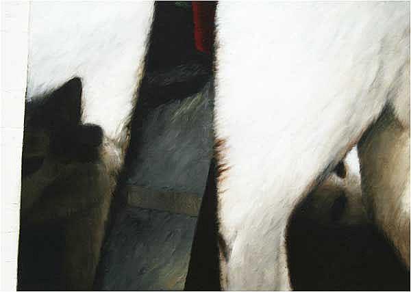 John Shinnors (b.1950) Three Cats oil on canvas