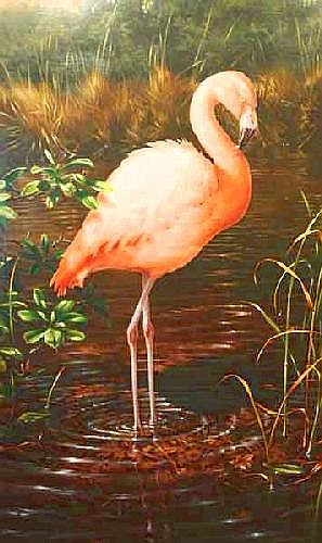 Michael Jackson (b.1961) British Chilean Flamingo