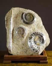 JURASSIC FOSSIL MATRIX SLAB ON WOOD DISPLAY STAND,