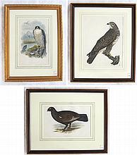 THREE ORNITHOLOGICAL HAND COLORED PRINTS: Prideaux
