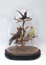 VICTORIAN TAXIDERMY BIRD DIORAMA containing three