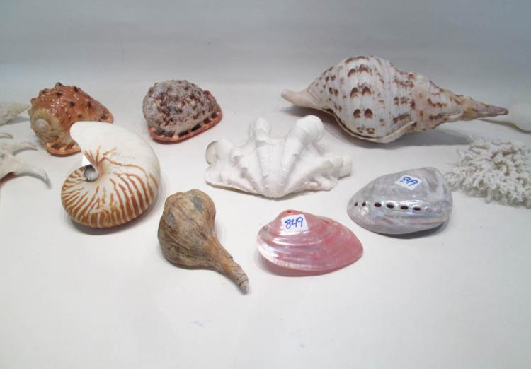 COLLECTION OF SEASHELLS AND SEA LIFE consisting of