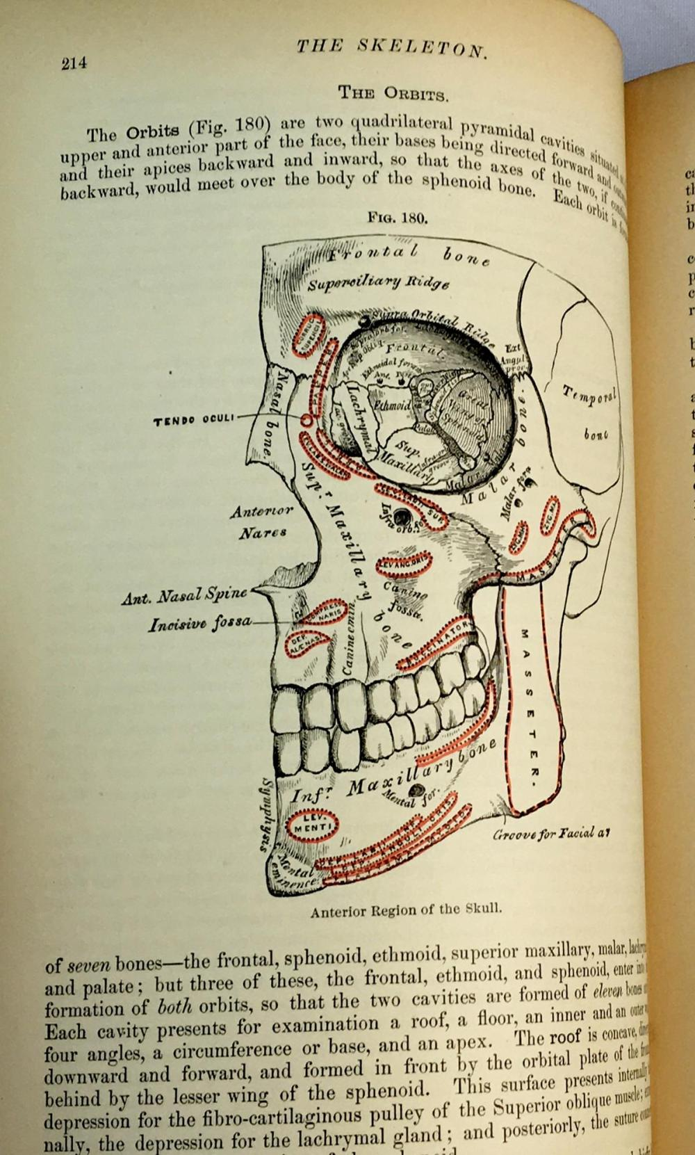 1887 Anatomy, Descriptive & Surgical by Henry Gray, F.R.S. Illustrated