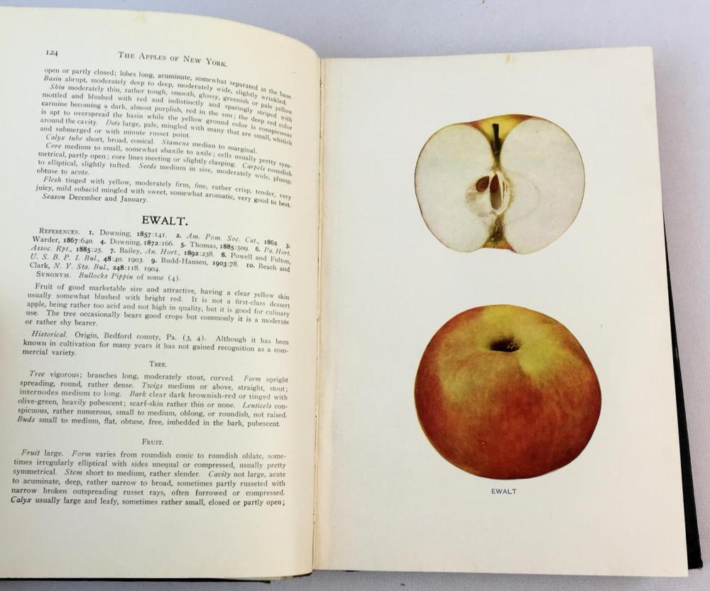 1905 The Apples of New York by S.A. Beach 2 Volume Set Illustrated FIRST EDITION