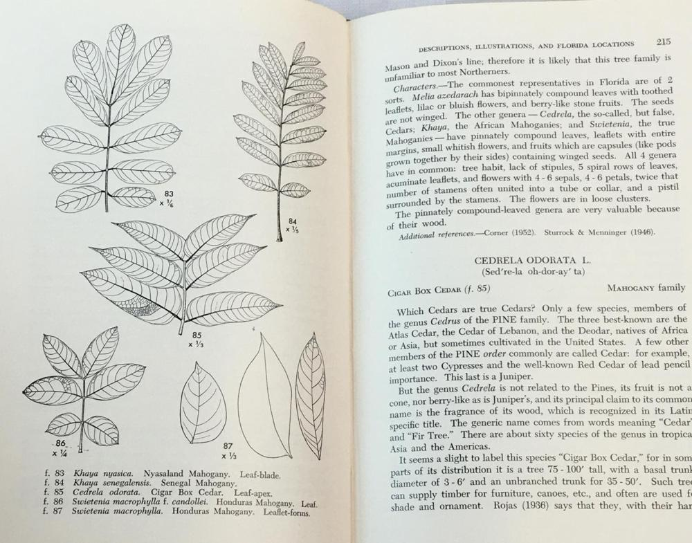 1956 Common Exotic Trees of South Florida (Dicotyledons) by Mary Franklin Barrett w/ Dust Jacket FIRST EDITION
