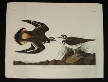 4 Bird Wildlife Prints by J.J. Audubon