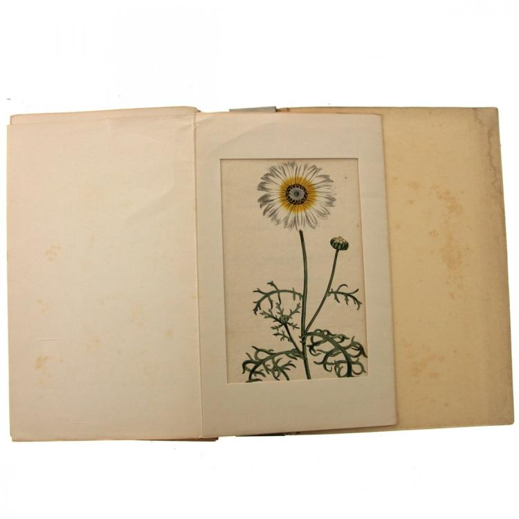 Sydenham Teast Edwards - 16 Floral Etchings.