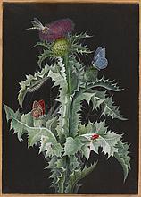 Barbara Regina Dietzsch, A Study of a Thistle (I)