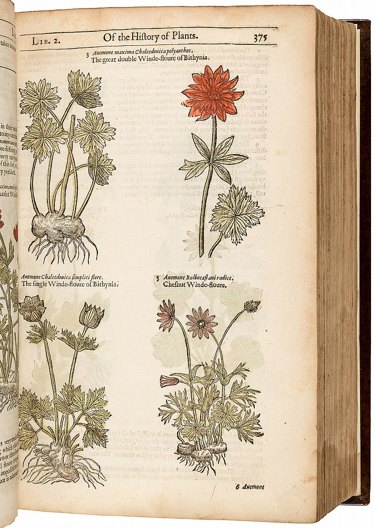 Gerard's Herbal Third Edition 1636