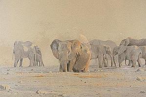 """DONALSON, KIM (1956-) """" Ftosha - elephants at"""