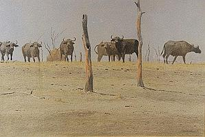 "DONALSON, KIM (1956-) "" Matusadone - buffalo herd"