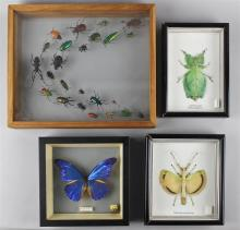 GROUP OF FOUR SPECIMEN SHADOW BOXES OF INSECTS