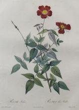 PIERRE JOSEPH REDOUTE (FRENCH, 1759-1840) ROSA INDICA Hand-colored stipple engraving: 21 x 14 in. (sheet)