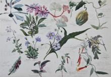 BRITISH SCHOOL (19TH/20TH CENTURY) BOTANICAL STUDIES Watercolor and graphite on paper: 14 x 19 3/4 in. (sight)