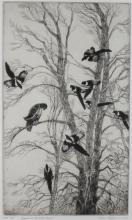 GENE KLOSS (AMERICAN, 1903–1996) MAGPIES AND RED-TAILED HAWK Etching: 15 x 1/2 x 9 1/4 in.