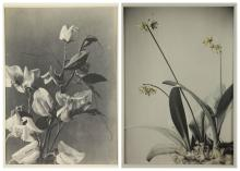 Lot 292: Late 19th & early 20th c. photos of People/Nature.