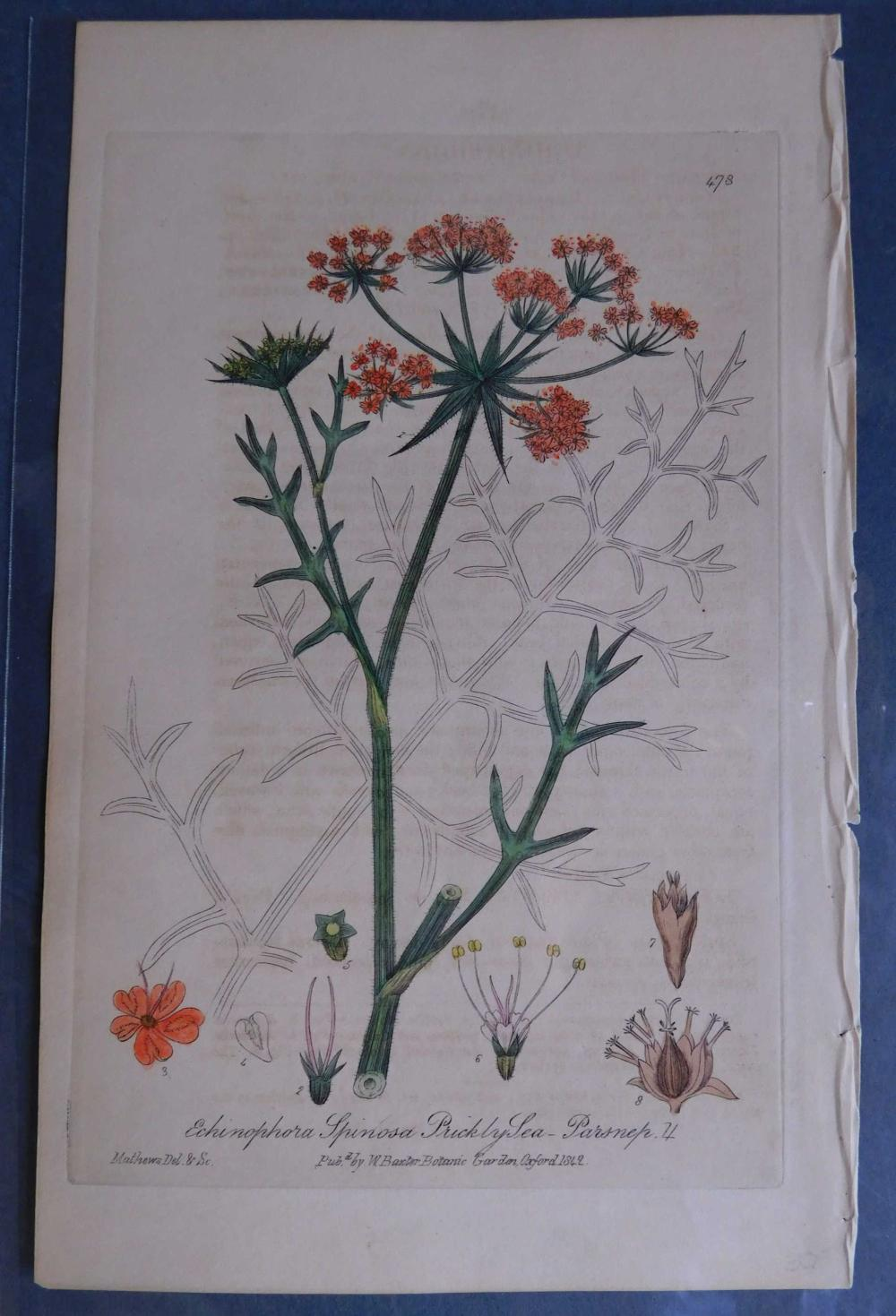 Approx. 20 hand colored botanical engravings