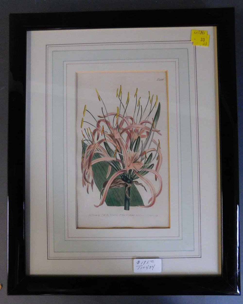 3 floral engravings: Curtis, 1804-1805. Framed.