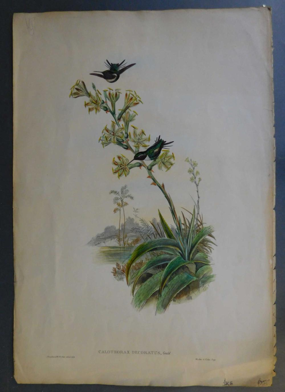 2 hand colored lithographs of birds, mid-1800s.