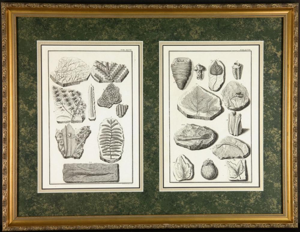 Johann Jakob Scheuchzer. Physica Sacra Engravings.