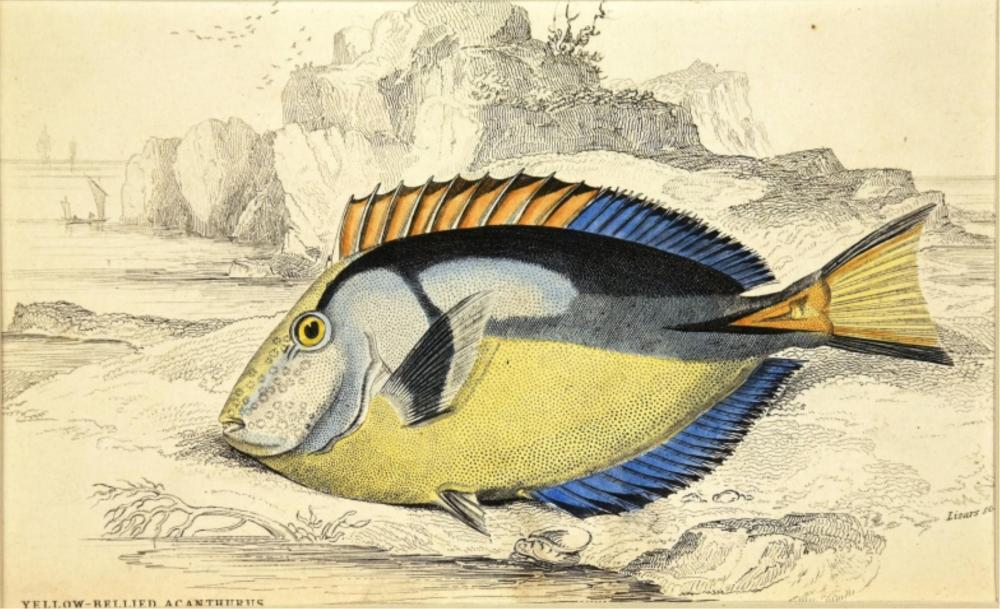William Home Lizars. 9 Ichthyology Plates. 1830-40