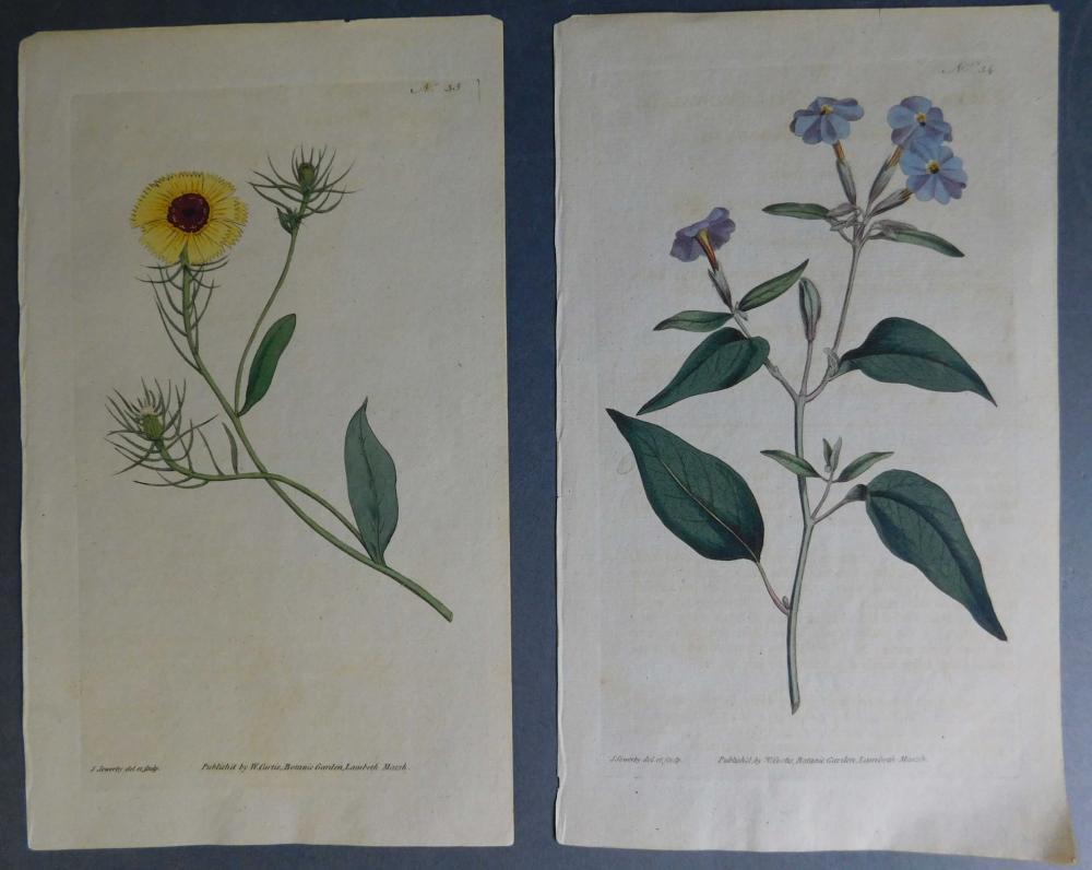 4 botanical engravings: Sowerby/Curtis.
