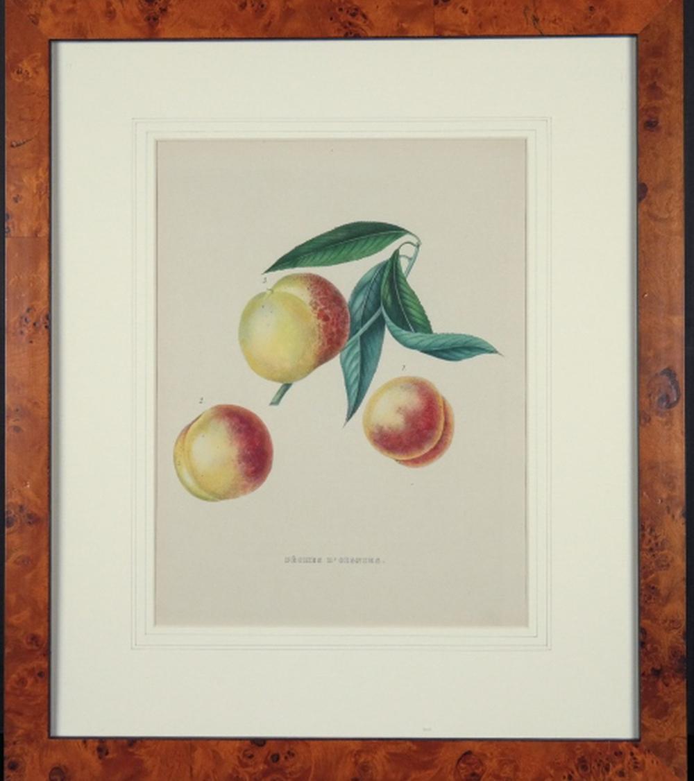 Alexandre Joseph Desire Bivort. 3 Fruit Studies.