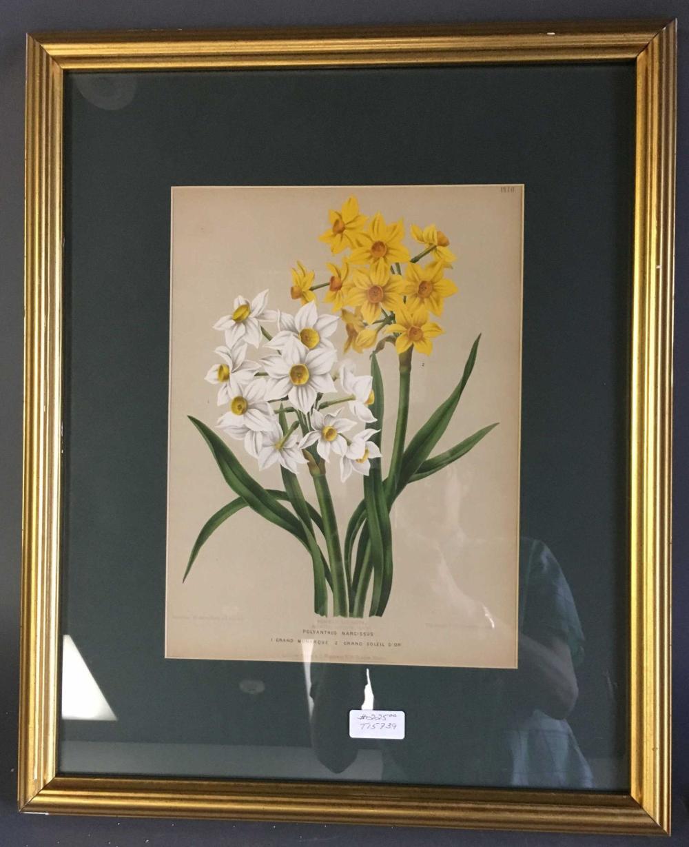 2 framed chromolithographs of flowers