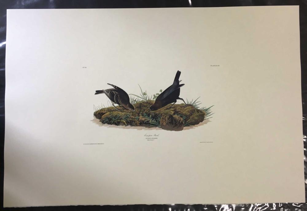 6 plates: Audubon, Birds of America, 1971.