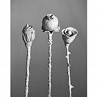 Jo Ann Callis (American, b. 1941); Untitled (after