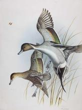 Lot 100: Dropping In Pintails Steve Dillard 1985 Signed Print