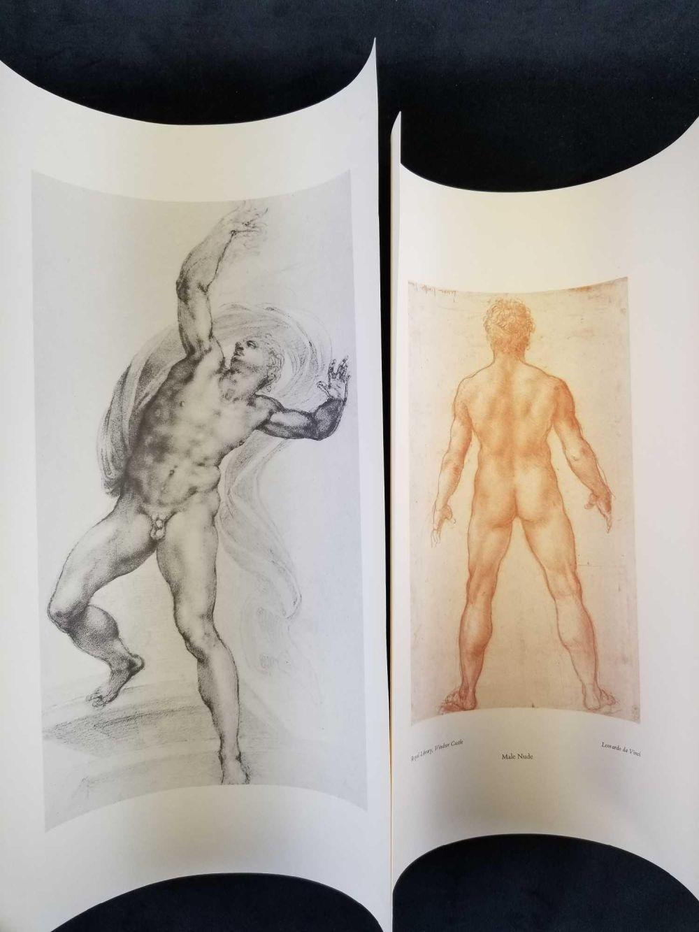 Set of two Male Anatomy Drawings