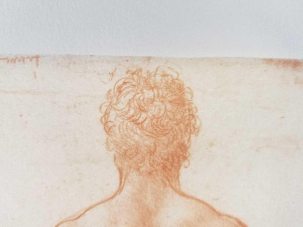 Lot 39: Set of two Male Anatomy Drawings